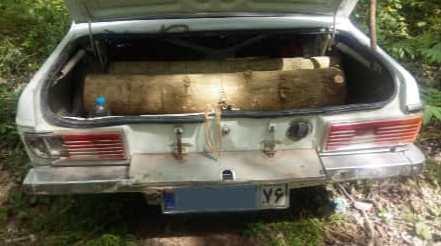 کشف چوب جنگلی قاچاق در پیکان سواری!