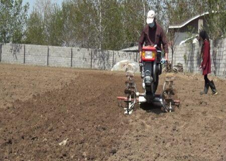 آغاز کشت بادامزمینی در قطب تولید بادامزمینی کشور