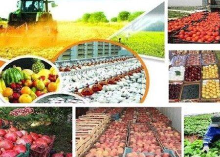 راهاندازی ۲۵۰ واحد فروشگاهی روستا بازار در کشور تا پایان سال