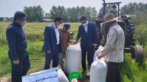 قرارگیری ۴۰۰ هکتار از اراضی آستانهاشرفیه در طرح تجهیز اراضی