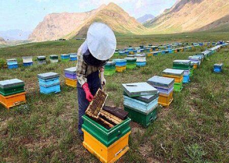 تولید بیش از ۶ هزار تن عسل در گیلان